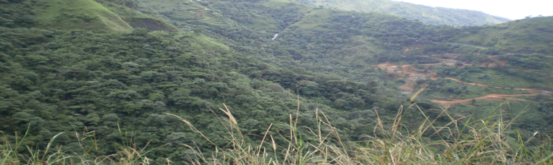 Kerala Wild Life Package Munnar
