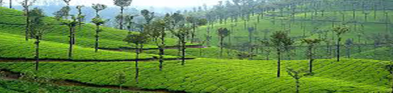 Valparai Tour Packages- Valparai holiday trip 2 nights 3 days Rs.2800/-per couple