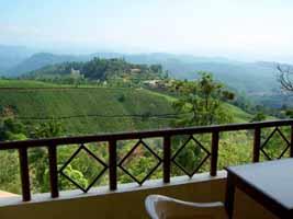 Tea garden View